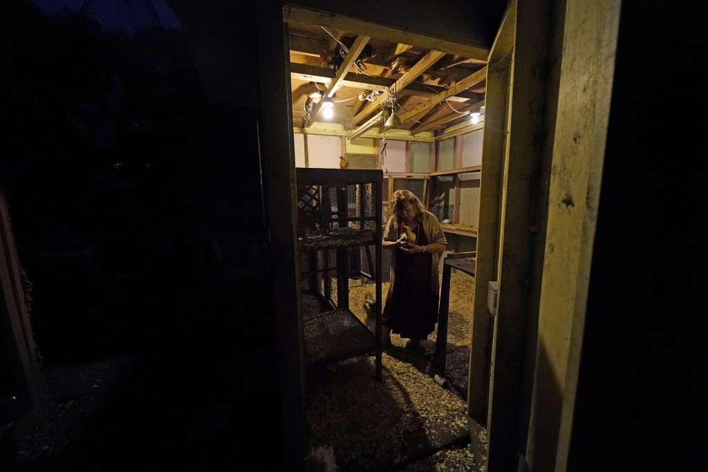Joan Martin shows a photographer one of her prized Silky Serama show roosters, Leon, in a chicken coop outside her home in Picayune, Miss., Wednesday,...