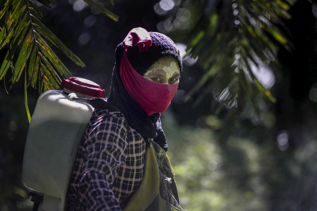 A female worker walks with a pesticide sprayer on her back at a palm oil plantation in Sumatra, Indonesia, Saturday, Sept. 8, 2018. Some workers use a...