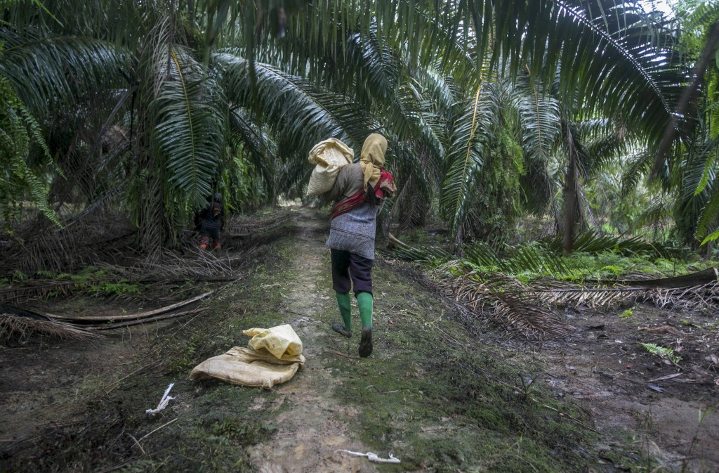 A female worker carries a bag of fertilizer in a palm oil plantation in Sumatra, Indonesia, on Tuesday, Nov. 14, 2017. Some women say they suffer from...