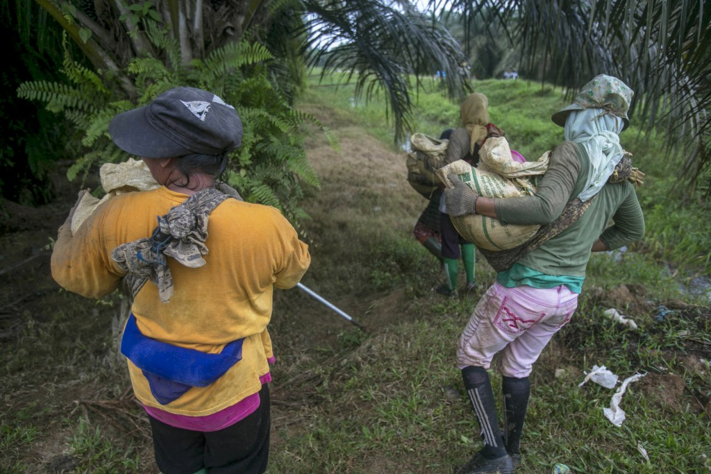 Female workers carry heavy loads of fertilizer at a palm oil plantation in Sumatra, Indonesia, Tuesday, Nov. 14, 2017. Some women spread up to 880 pou...