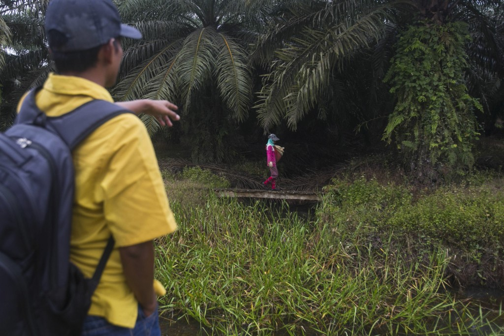 A woman walks with a sack of fertilizer to be spread in a palm oil plantation in Sumatra, Indonesia, Nov. 14, 2017. Some workers who suffer from colla...