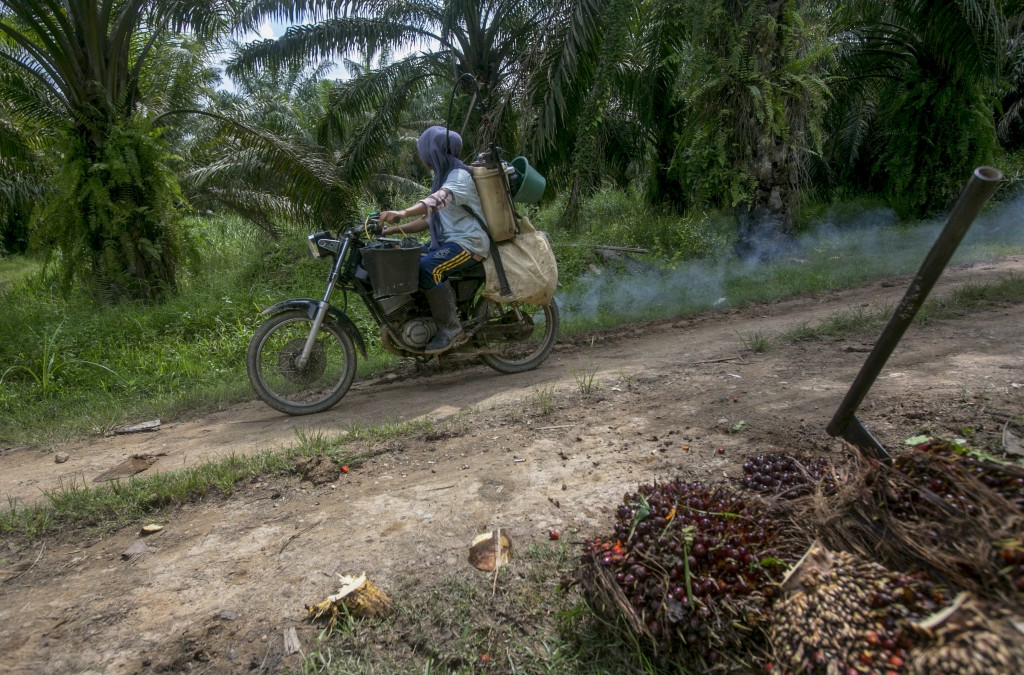 A woman rides a motorbike with a container full of pesticide on her back in a palm oil plantation in Sumatra, Indonesia, Monday, Nov. 13, 2017. Female...