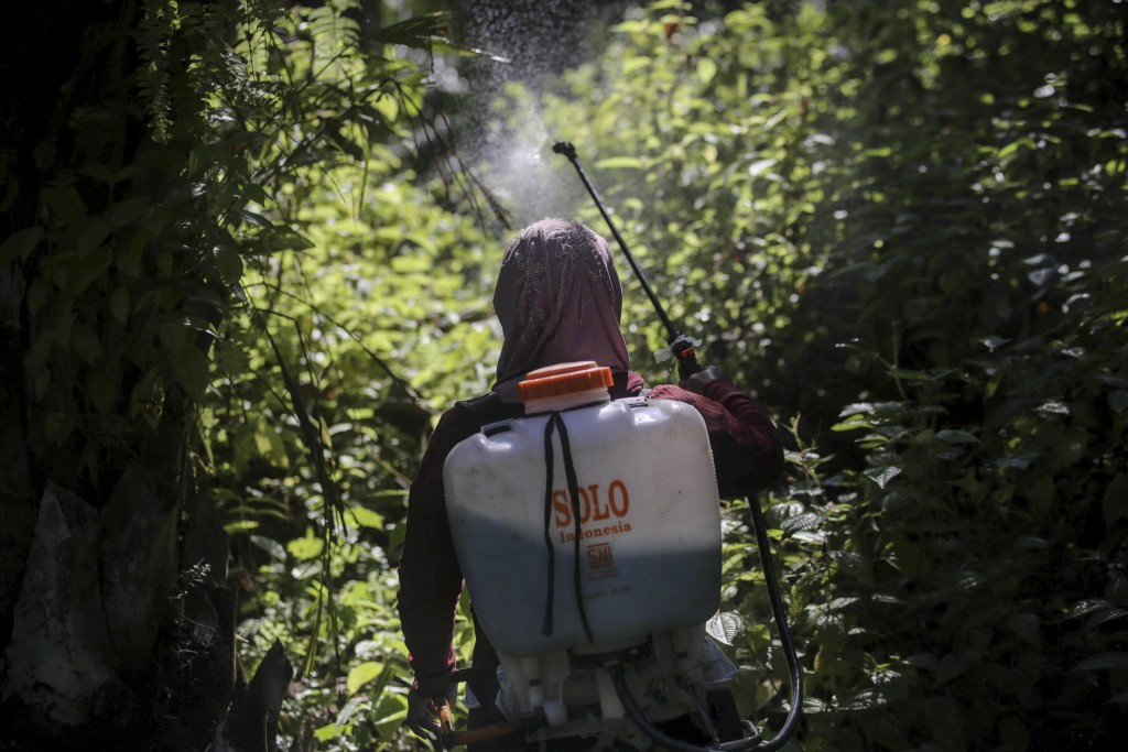 A female worker sprays herbicide in a palm oil plantation in Sumatra, Indonesia, on Saturday, Sept. 8, 2018. Many women are hired by subcontractors on...