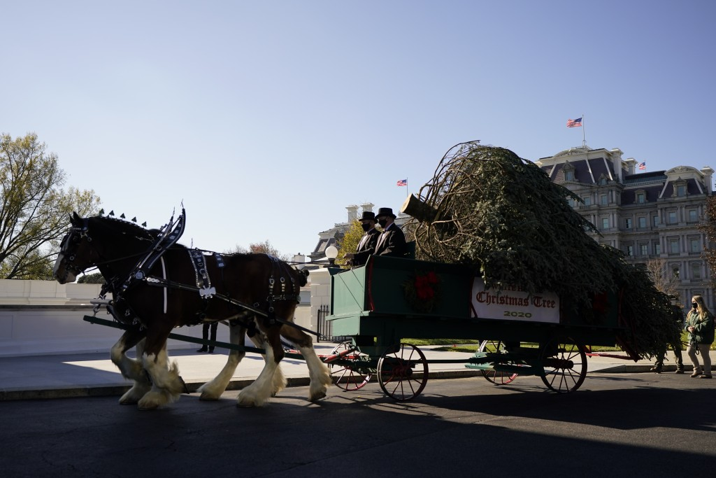 The 2020 Official White House Christmas tree is presented on the North Portico of the White House, Monday, Nov. 23, 2020, in Washington. (AP Photo/And...
