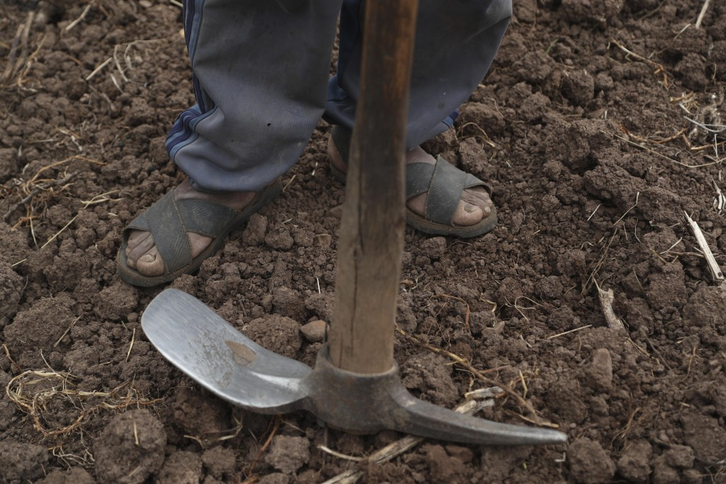 Ciriaco Huaman takes a break from sowing potatoes in Pisac, southern rural Peru, Friday, Oct. 30, 2020. Across this South American nation an estimated...