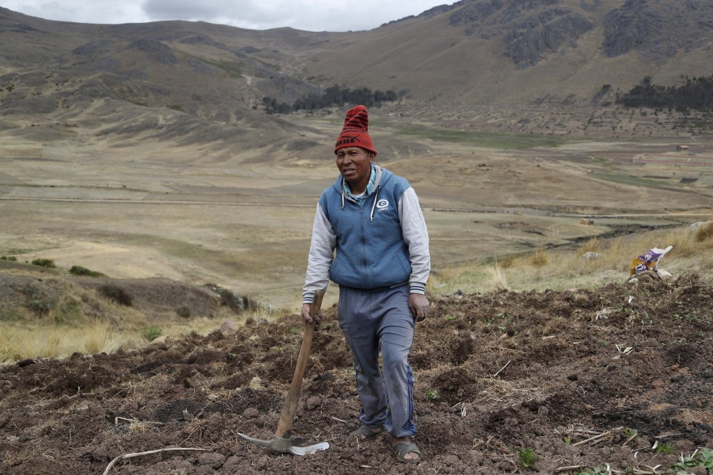 Farmer Ciriaco Huaman holds a pickaxe while standing in his potato field during harvest, in Pisac, southern rural Peru, Friday, Oct. 30, 2020. Farmers...