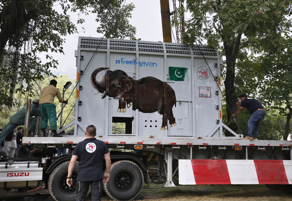 Pakistani wildlife workers and experts from the international animal welfare organization Four Paws, secure a crate carrying an elephant named Kaavan ...