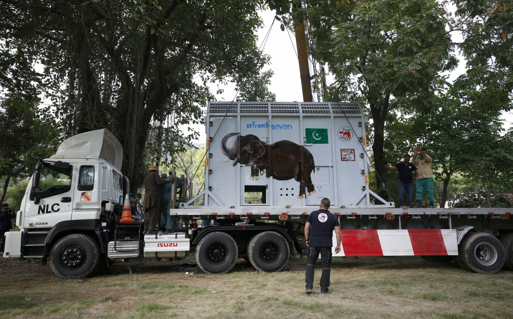 Pakistani wildlife workers and experts from the international animal welfare organization Four Paws load a crate carrying an elephant named Kaavan int...