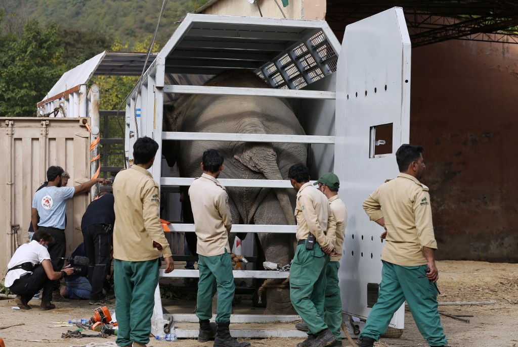 Pakistani wildlife workers arrange an elephant named Kaavan into a crate for transporting him to a sanctuary in Cambodia, at the Marghazar Zoo in Isla...