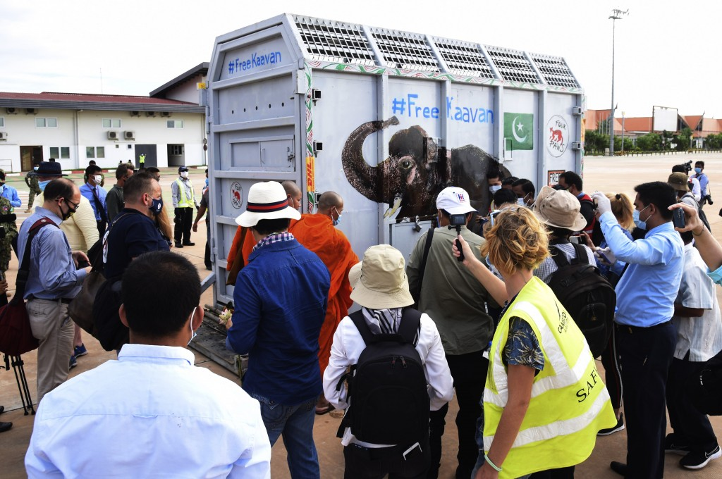 A shipping container holding Kaavan the elephant arrivals from Pakistan at the Siem Reap International Airport, Cambodia, Monday, Nov. 30, 2020. Kaava...