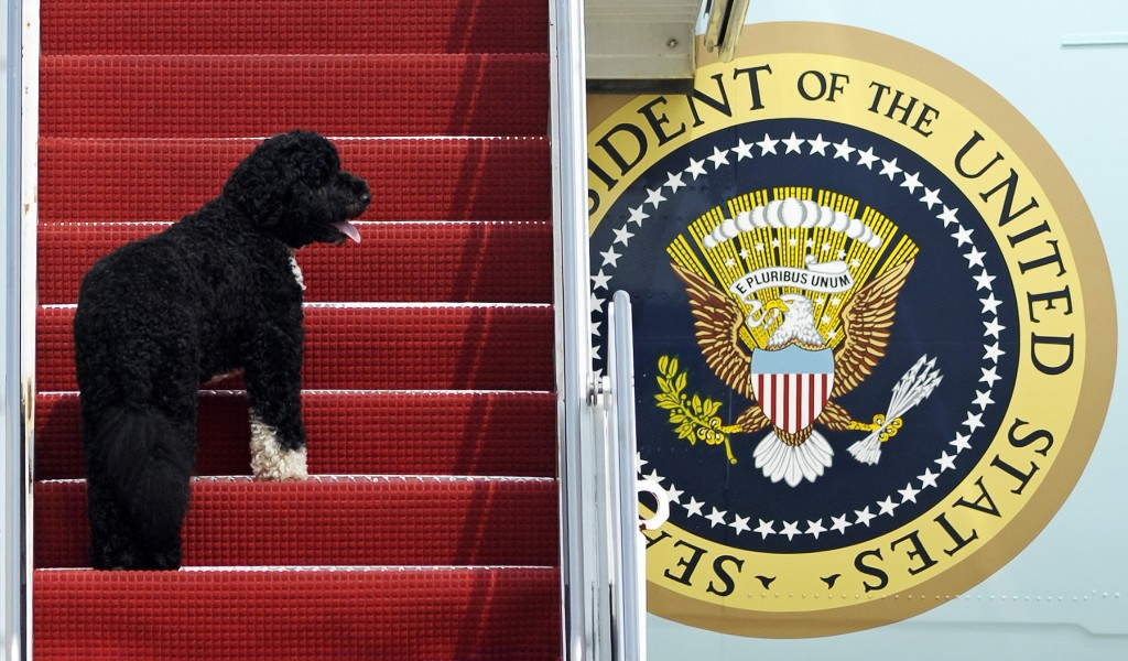 FILE - This Aug. 4, 2010 file photo shows presidential pet Bo climbing the stairs of Air Force One at Andrews Air Force Base, Md. for a flight to Chic...