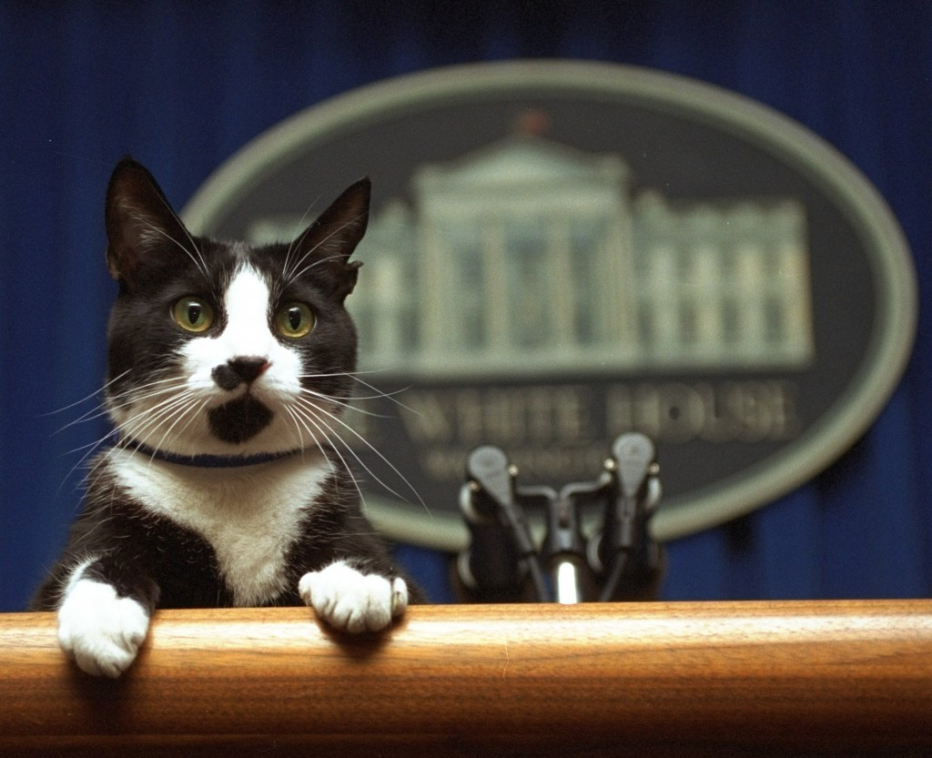 FILE- In this March 19, 1994 file photo, President Bill Clinton's cat Socks peers over the podium in the White House briefing room in Washington. The ...