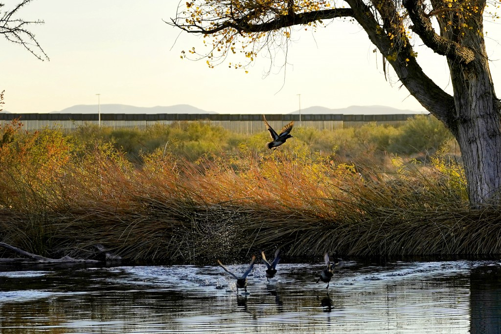 Wild ducks fly through a marsh area as the top of a newly erected border wall cuts through the San Bernardino National Wildlife Refuge, Tuesday, Dec. ...