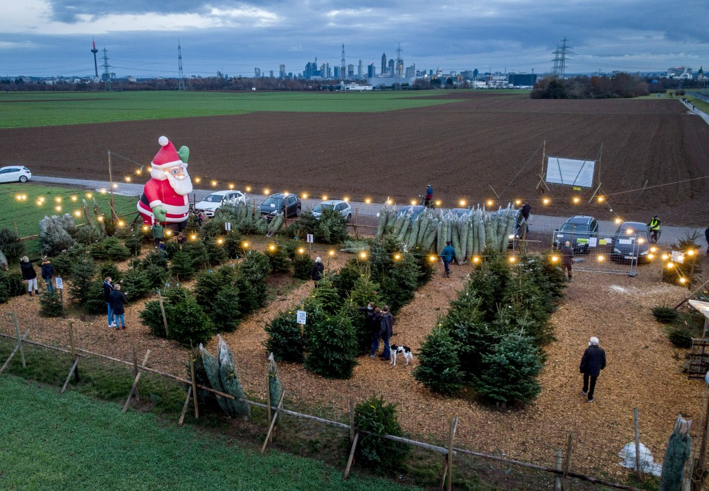 Christmas trees are lined up for sale on the outskirts of Frankfurt, Germany, Sunday, Dec. 13, 2020. Chancellor Angela Merkel said she and the governo...