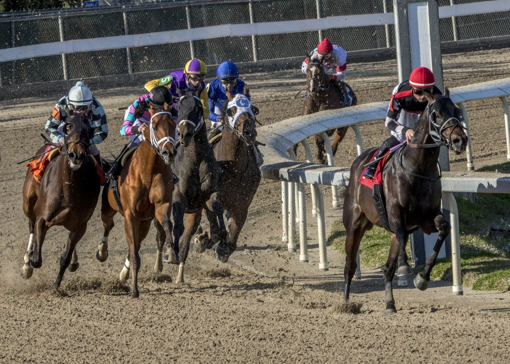 In this image provided by Hodges Photography, Quick Tempo with Adam Beschizza aboard led gate to wire to win the 71st running of the Sugar Bowl Stakes...