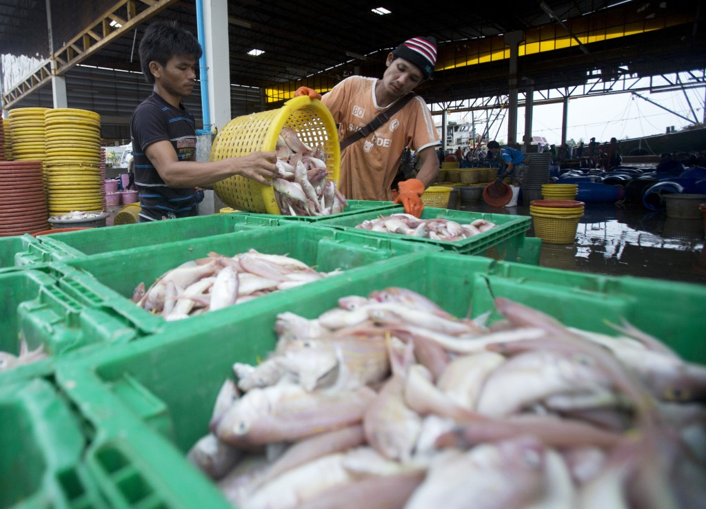 FILE - In this June 20, 2014, file photo, migrant workers separate freshly caught fish by size at a fish market in Samut Sakhon Province, west of Bang...