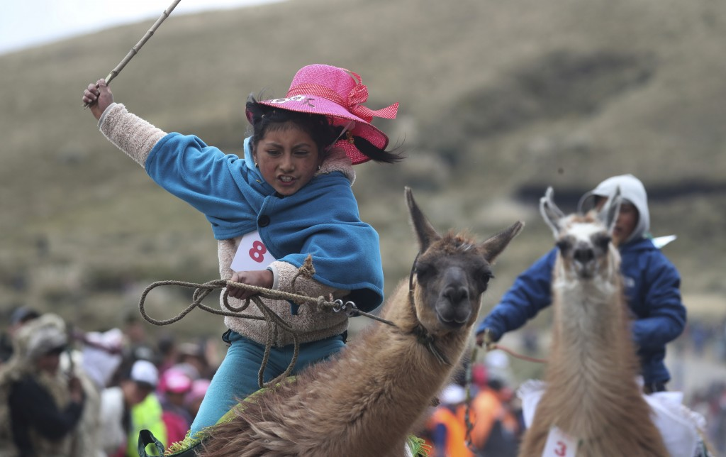 Milena Jami whips her llama to secure first place in the 500-meter llama race, age 7-8 category, at Llanganates National Park in Ecuador, Saturday, Fe...