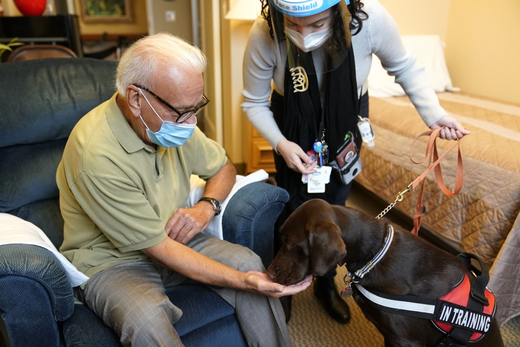 Kida, a chocolate Labrador, visits with Sal Gonzales, 79, in his room at The Hebrew Home at Riverdale in New York, Wednesday, Dec. 9, 2020. New dog re...