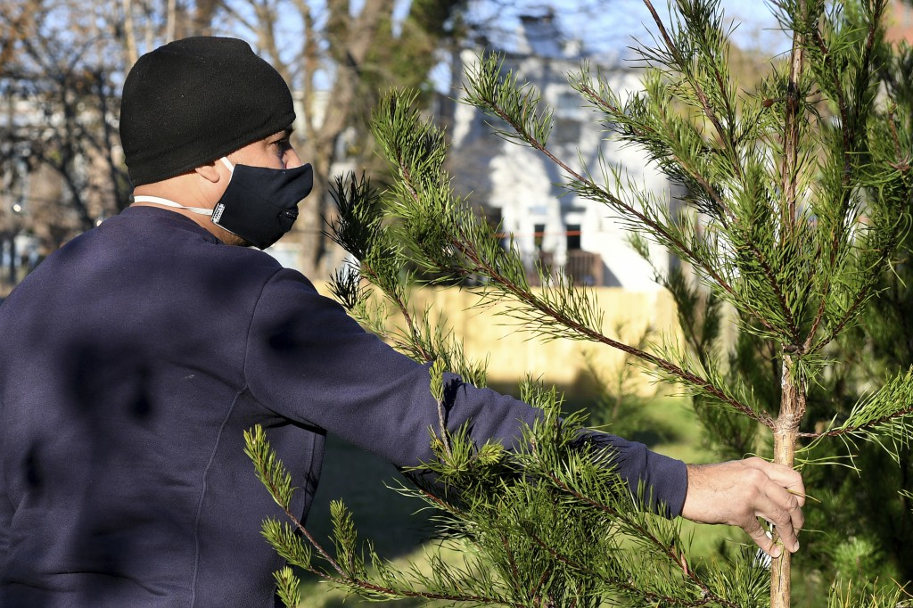 Rei Alvarez, of Richmond, picks out a tree at Frank Pichel's (not pictured) tree lot, Sunday, Dec. 6, 2020, in Richmond, Va. A Virginia man has found ...