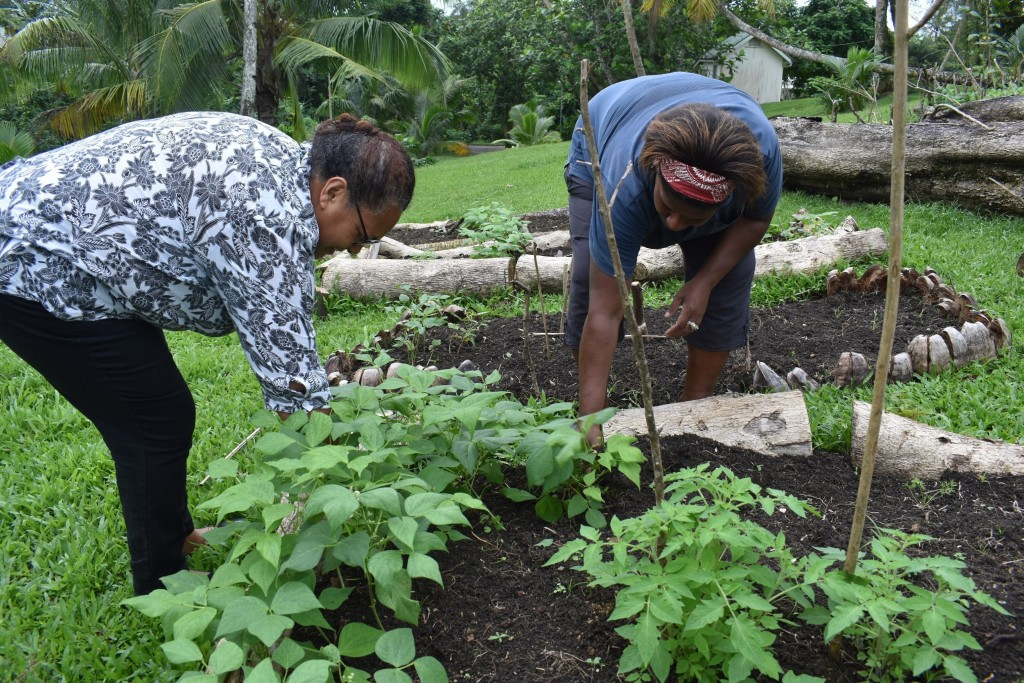 This July 2020 photo provided by Fiji's Ministry of Agriculture shows staff members of the Suva Christian School, Louisa John, left, and her colleague...