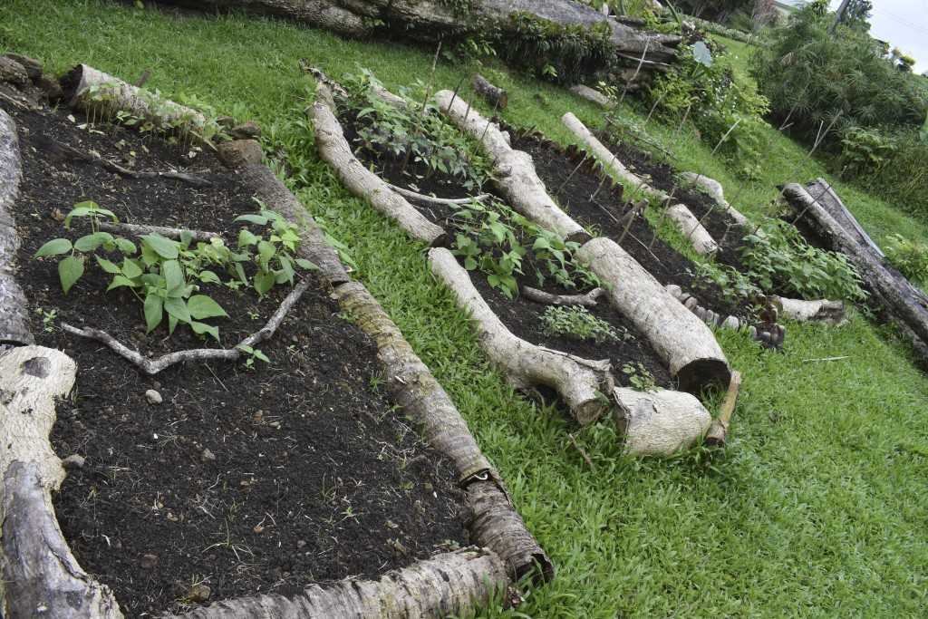 This July 2020 photo provided by Fiji's Ministry of Agriculture shows a vegetable garden at the Suva Christian School in Suva, Fiji. Coronavirus infec...