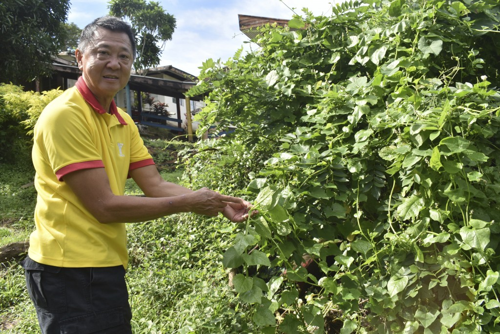 This July 2020 photo provided by Fiji's Ministry of Agriculture shows Young Men's Christian Association General Secretary John Lee and a spinach plant...