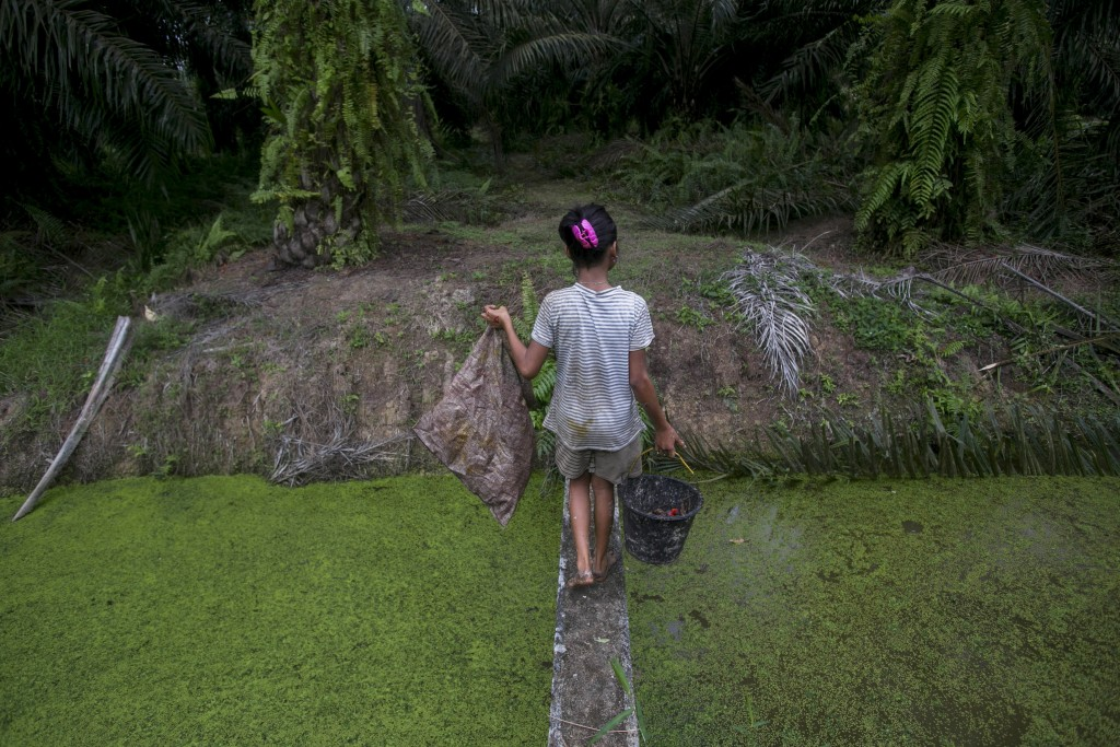 A child carries palm kernels collected from the ground across a creek at a palm oil plantation in Sumatra, Indonesia, Monday, Nov. 13, 2017. Child lab...