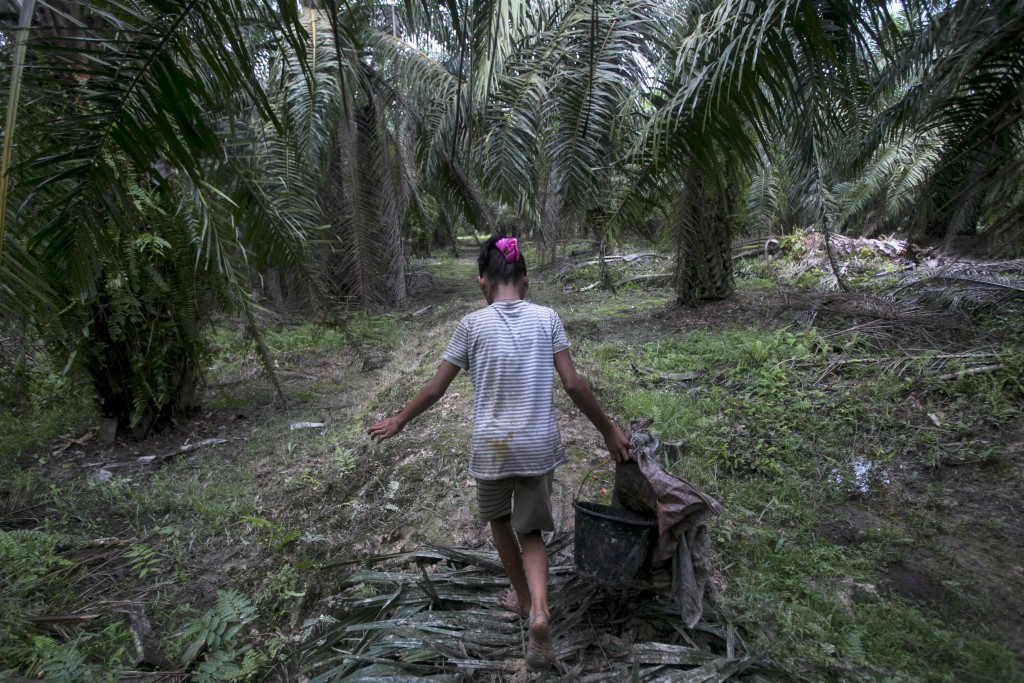 A child carries palm kernels collected from the ground at a palm oil plantation in Sumatra, Indonesia, Monday, Nov. 13, 2017. (AP Photo/Binsar Bakkara...