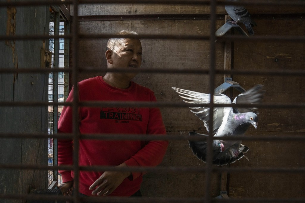 Huanan market vendor Jiang Dafa tends to his pigeons at home in Wuhan in central China's Hubei province on Oct. 22, 2020. China's search for the COVID...