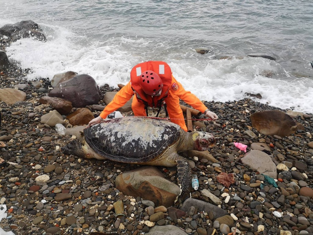 A sea turtle found dead in eastern Taiwan on Feb. 23. (Coast Guard photo)