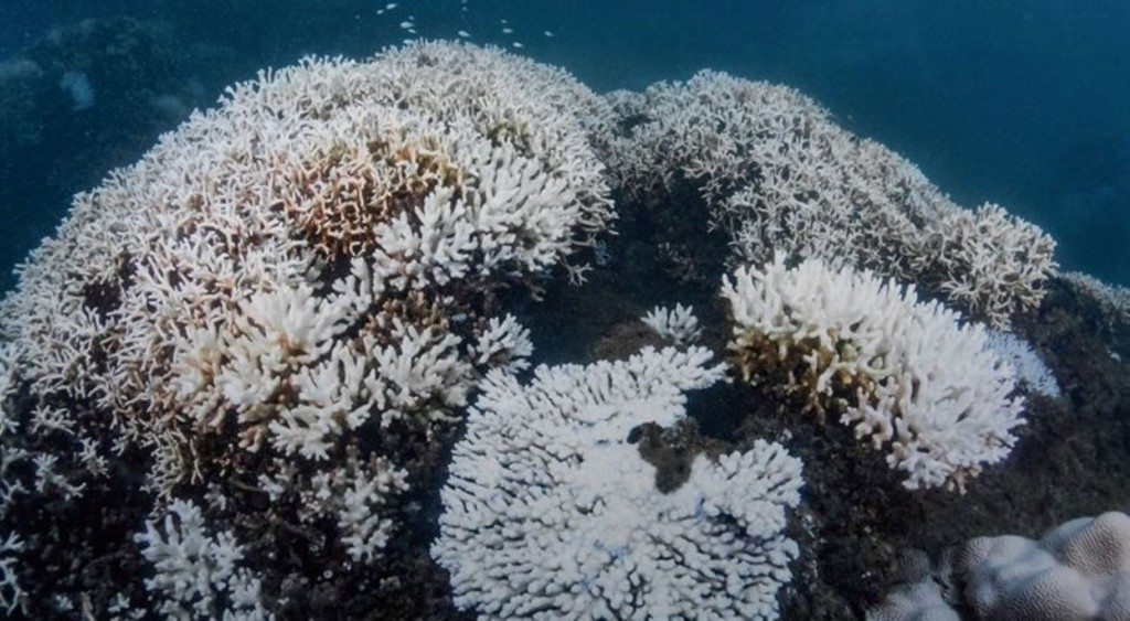 Bleached corals (Taiwan Dive Center photo)