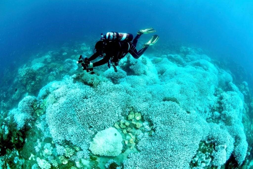 Coral bleaching in Kenting