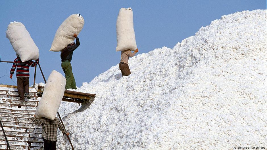 「全球政策中心」發布報告稱,每年有50多萬新疆民眾被迫從事棉花採摘工作。