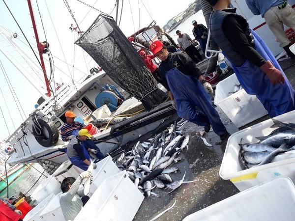 照片來源:新北市政府漁業處提供