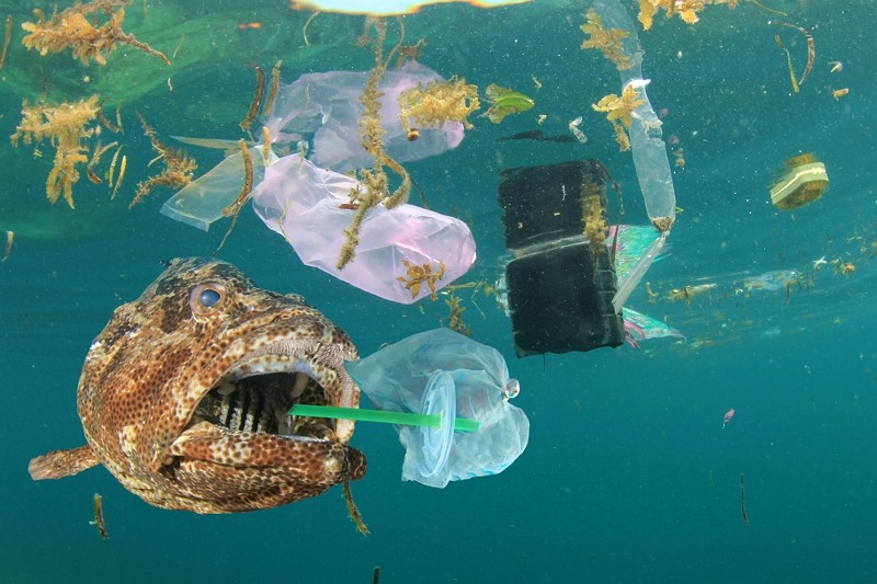 Plastic pollution in ocean and fish eating plastic straw and bag. (Getty Images)