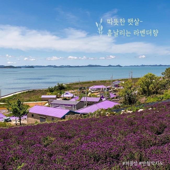 疫情下的網美天堂 南韓「紫島」夢幻如童話