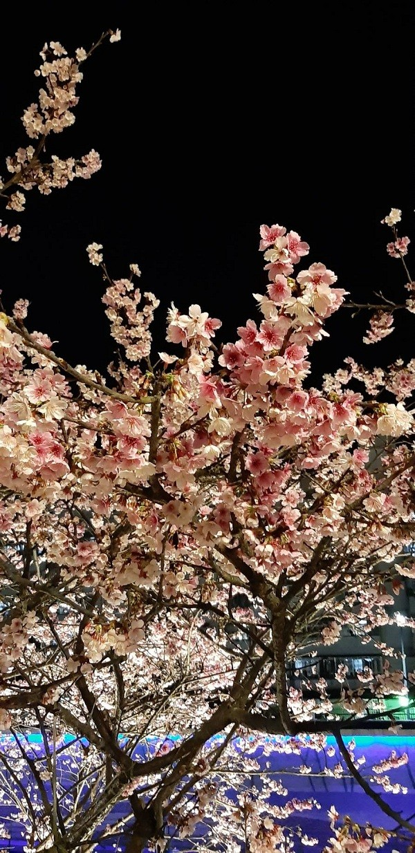 How to enjoy Taipei's floral bloom this season