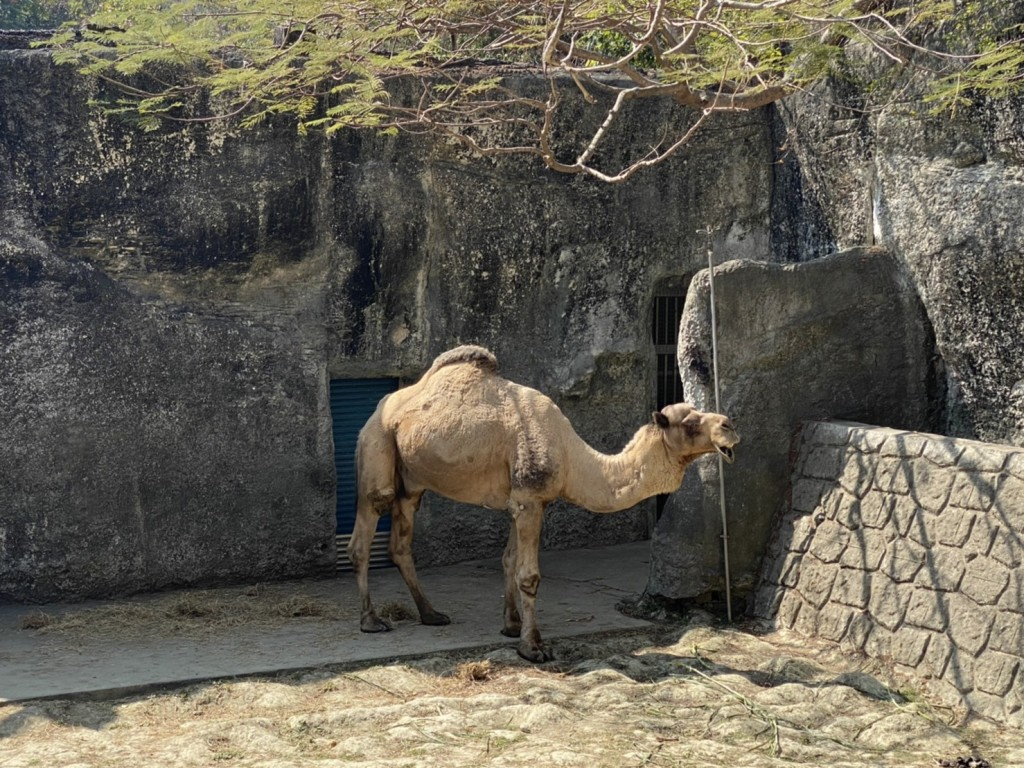 Free entry at south Taiwan's Shoushan Zoo until March