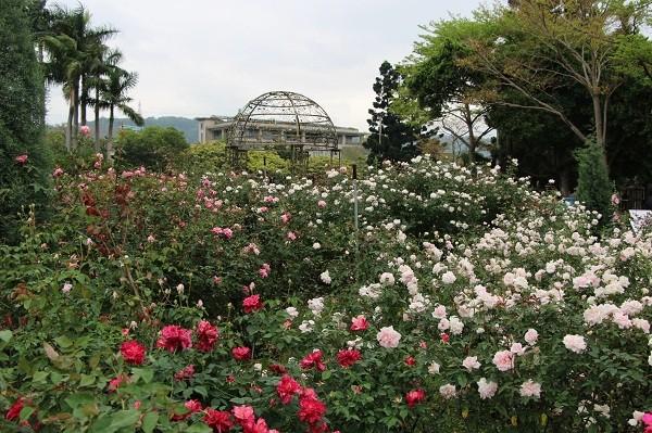 2021 Taipei Rose Festival to showcase 700 varieties of roses