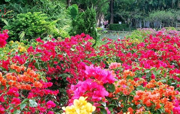 Taiwan's top 5 flower festivals