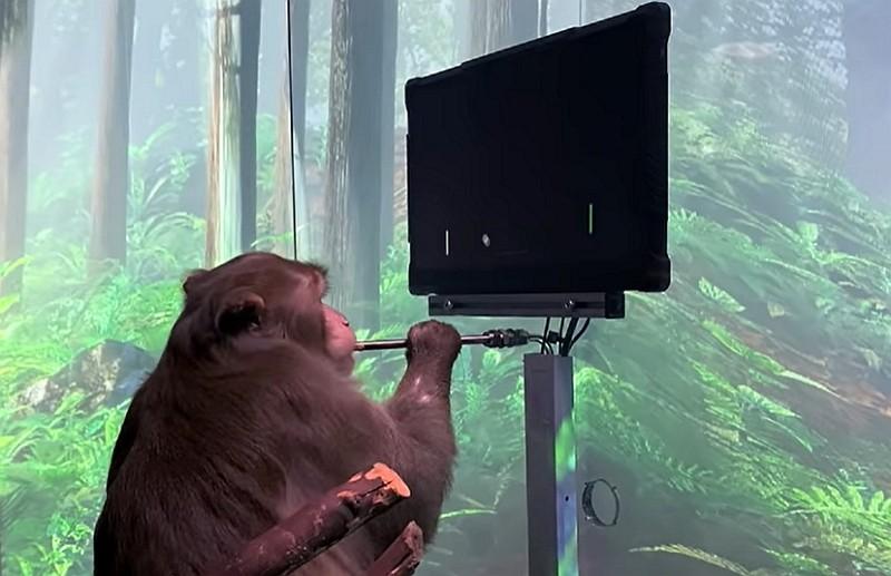 猴子靠意念打電玩(YouTube, Neuralink 影片擷圖)