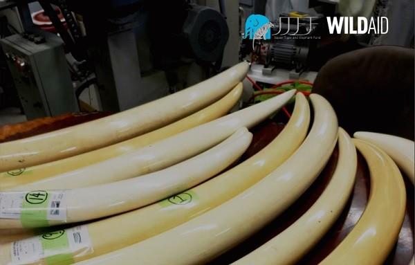 圖片截取自野生救援WildAid報告書