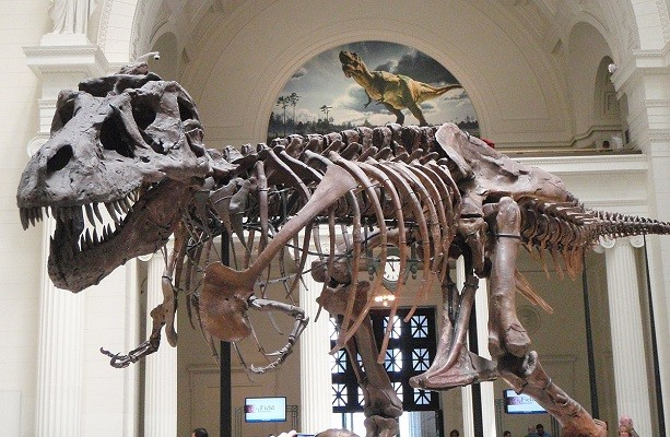 'Like Godzilla, but actually real': a study shows that T. rex numbered 2.5 billion  Taiwanese news