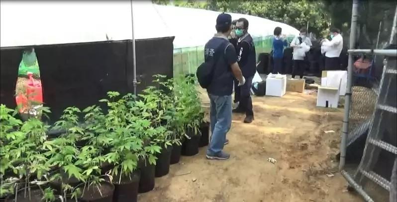 Cops bust biggest marijuana grow-op in Taiwan's history