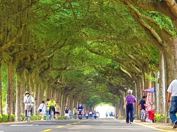 Tree-lined country road in southern Taiwan becomes popular destination