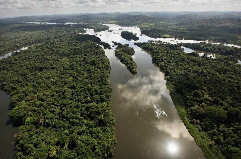 亞馬遜雨林(Getty Images)