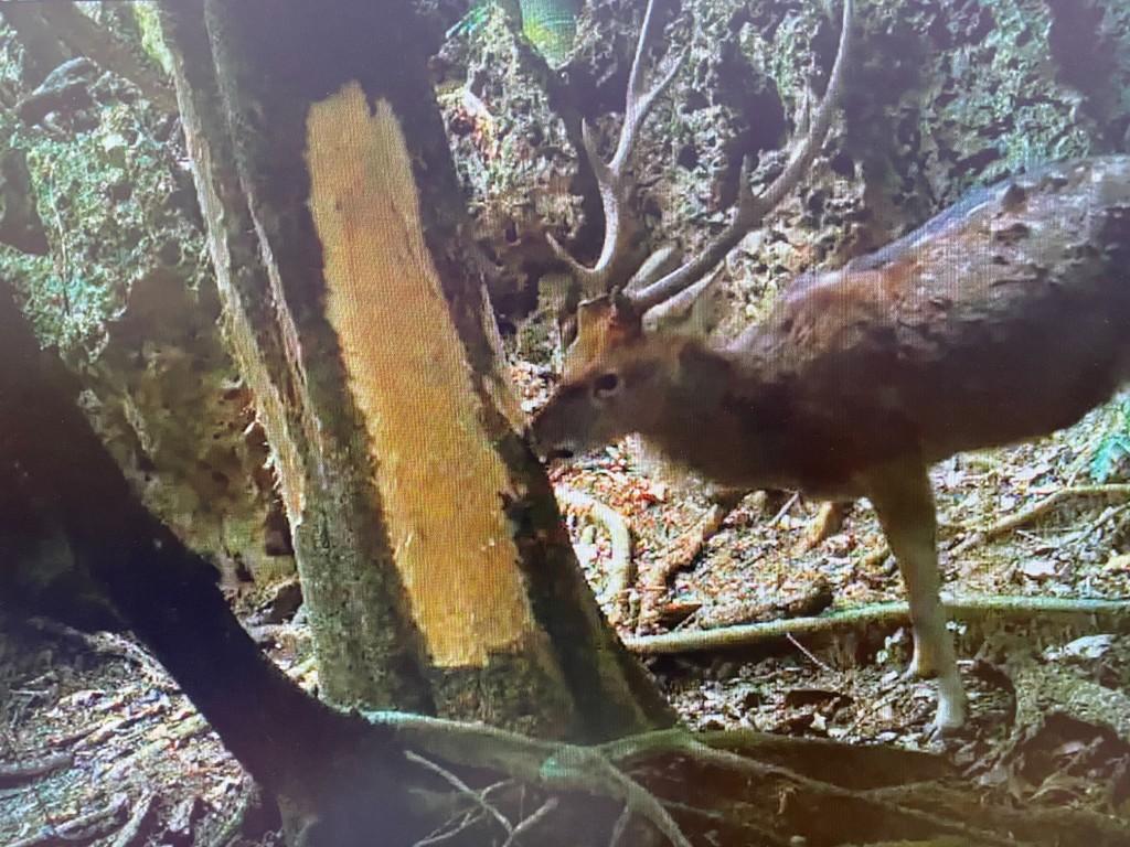 照片由行政院農業委員會林業試驗所提供