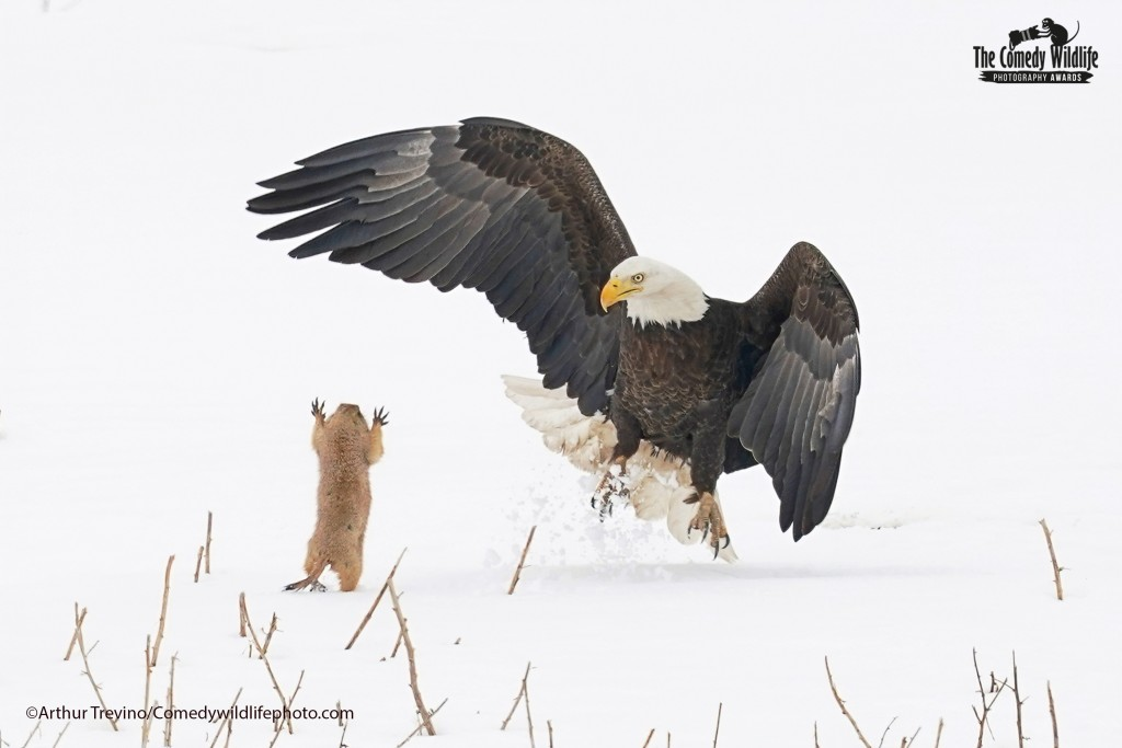©Arthur Trevino / Comedy Wildlife Photo Awards 2021