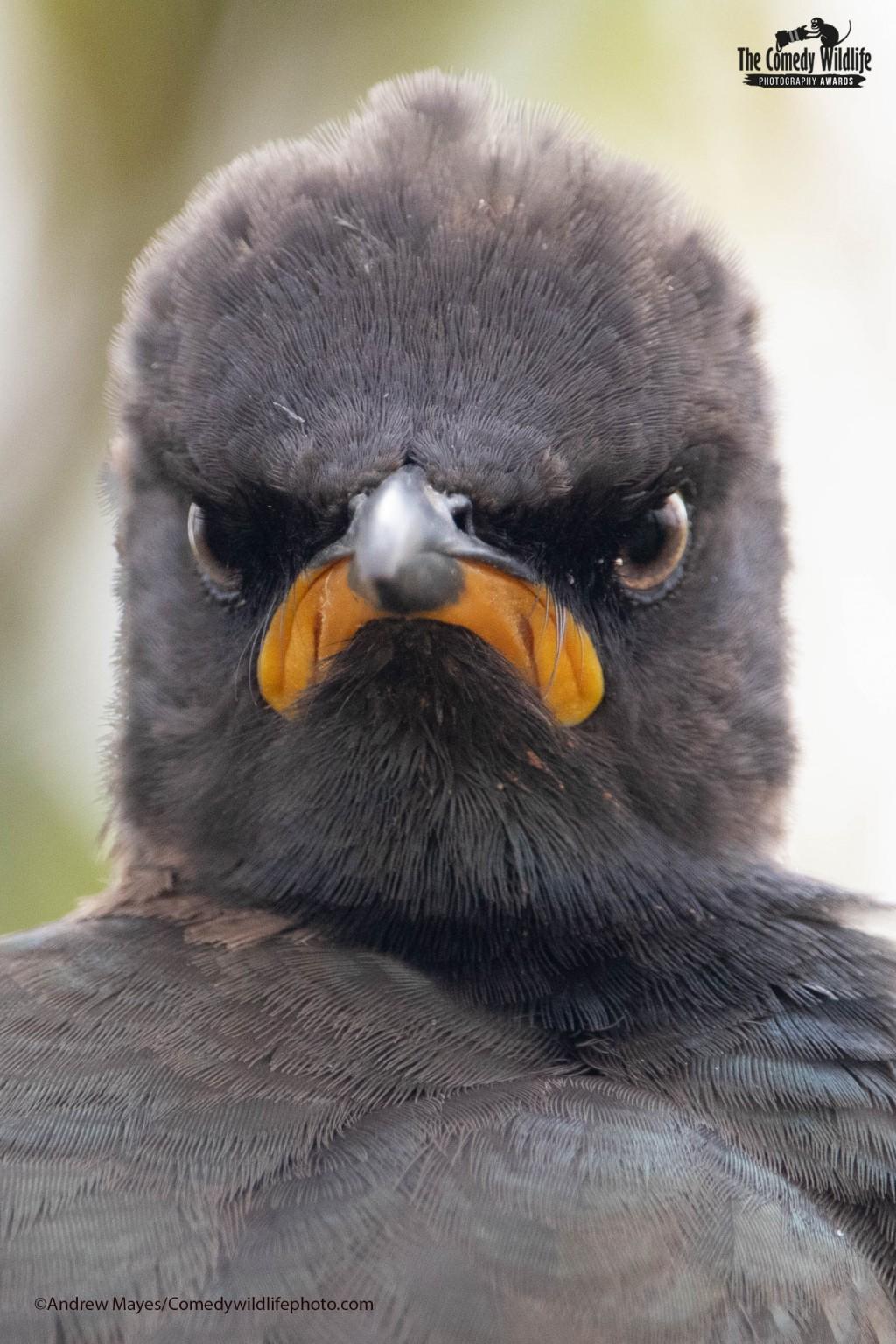 誰最上相!2021搞笑野生動物攝影獎 即日起開放報名