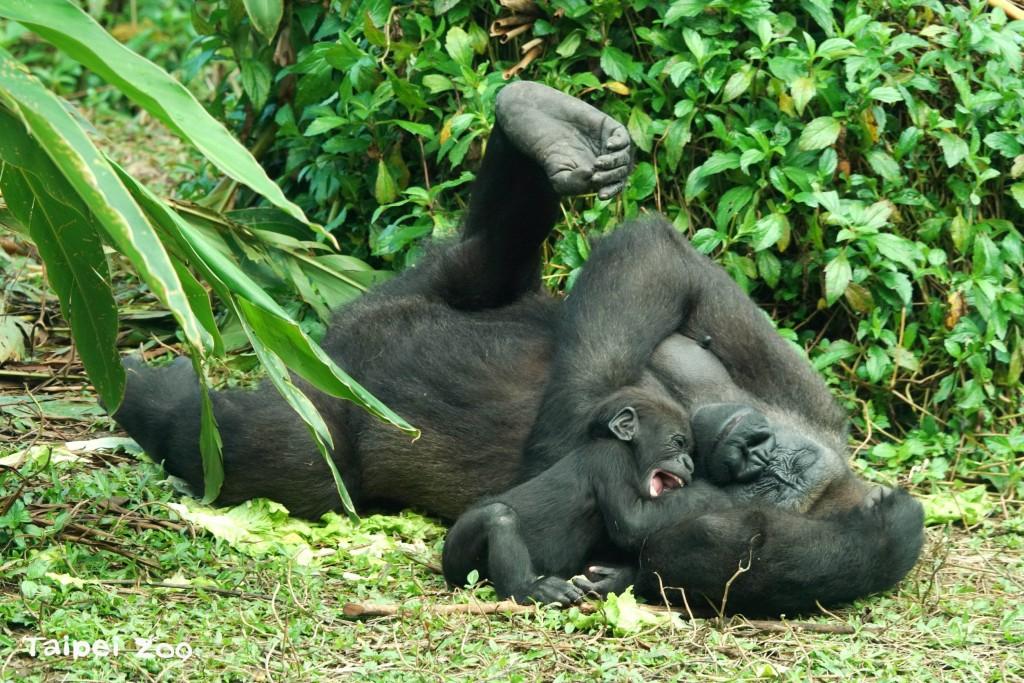 照片來源:台北市立動物園提供